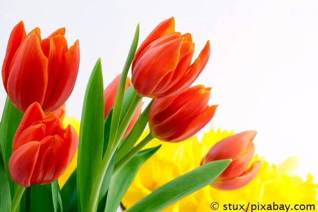 Glücksmomente im April - Tulpen